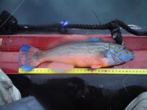 två fina blågyltor i fiskereportage trög början men bra avslutning i fisketidning