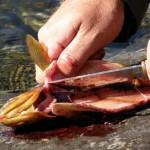 roligt fiske i fiskereportage fantastiskt fiske i miekak i fisketidning