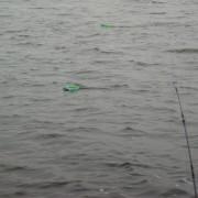 djupgående drag i fiskereportaget nötande ger resultat i fisketidningen fiskemagasinet.se