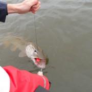 landa fisken i fiskereportaget nötande ger resultat i fisketidning