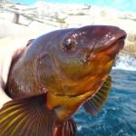 många fina gyltor runt kilot i fiskereportage gyltafiske med pelle och gustav i fisketidning
