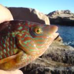 roligt fiske i fiskereportage pelle fiskar från land i fisketidning