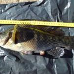 pelle fiskar från land i detta fiskereportage i fisketidningen fiskemagasinet.se