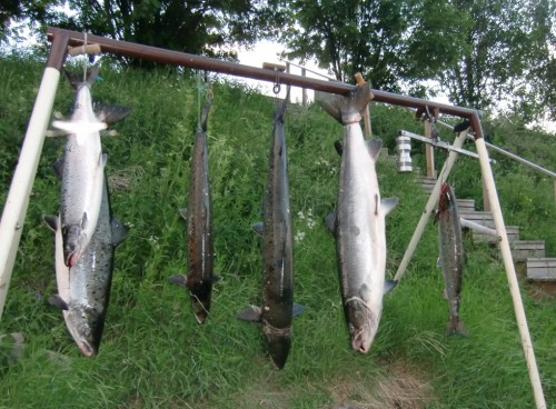 fiskeklockan höll vad den lovade i huggtabell och månfas på fisketidning