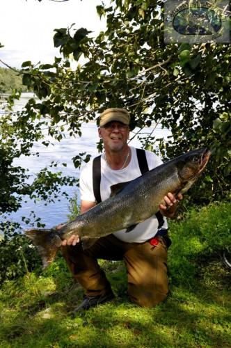laxen och den som jagar laxen i lyckat laxfiske i indalsälven på fisketidning