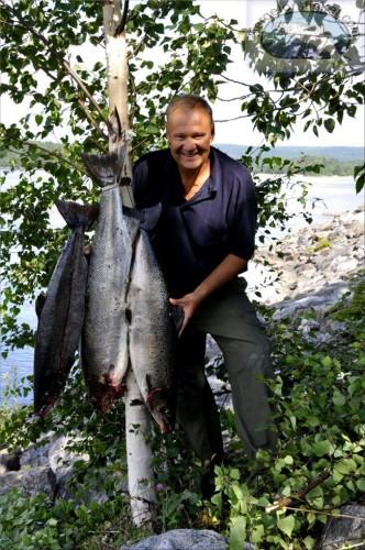 fin laxhanne på drygt 7,30 kg i fiskereportaget lyckat laxfiske i indalsälven på fiskemagasinet.se