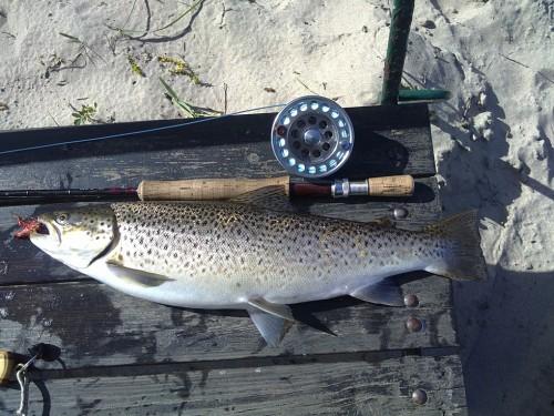 öringen gjorde bra motstånd i fiskereportaget rickard tog en trippel i stensån på fisketidningen fiskemagasinet.se