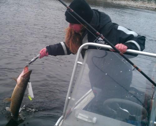 cissis flöte i gäddfiske i marma på fisketidning