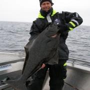 team poseidon i söröya - 2011 med 11 flundror upp till 17,8 kg i fisketidningen