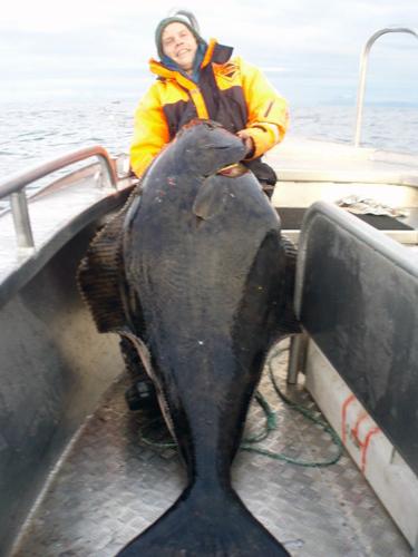 storflundra i söröya - 2009 i fiskereportage i fisketidning fiskemagasinet.se