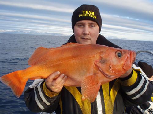 kungsfisk i söröya - 2009 i fiskereportage i fisketidning fiskemagasinet.se