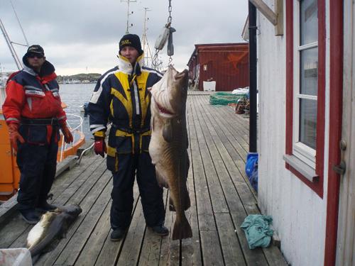 torsk på över 30 kg i söröya - 2009 i fisketidning fiskemagasinet.se