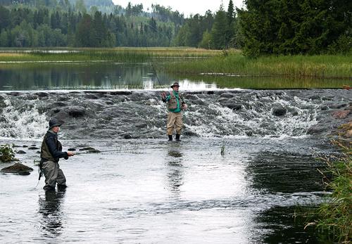 Fjällorna drog västerut och fick napp i detta fiskereportage i strömmande vatten