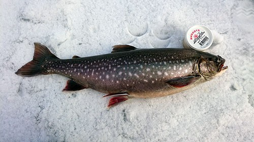Joel Rynbäck på rödingsäventyr i fisketidningen fiskemagasinet.se