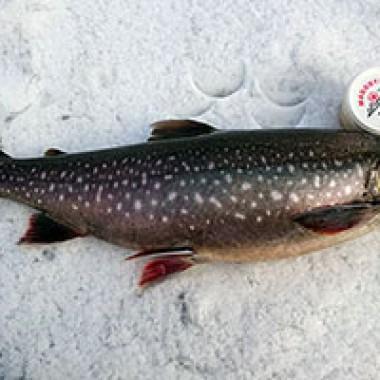 rödingsäventyr på fisketidningen fiskemagasinet.se